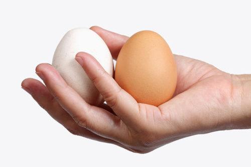 Одно яичко имеет способности выработки большого числа сперматозоидов