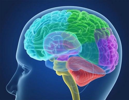 Киста головного мозга